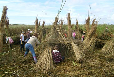 Reed Henge picture